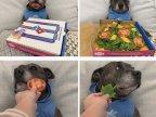 chien-piege-pizza