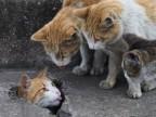 deux-chats-tirer-langue