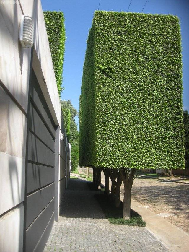 arbres-tailles-rectangle