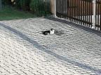 chat-devrait-mettre-regime