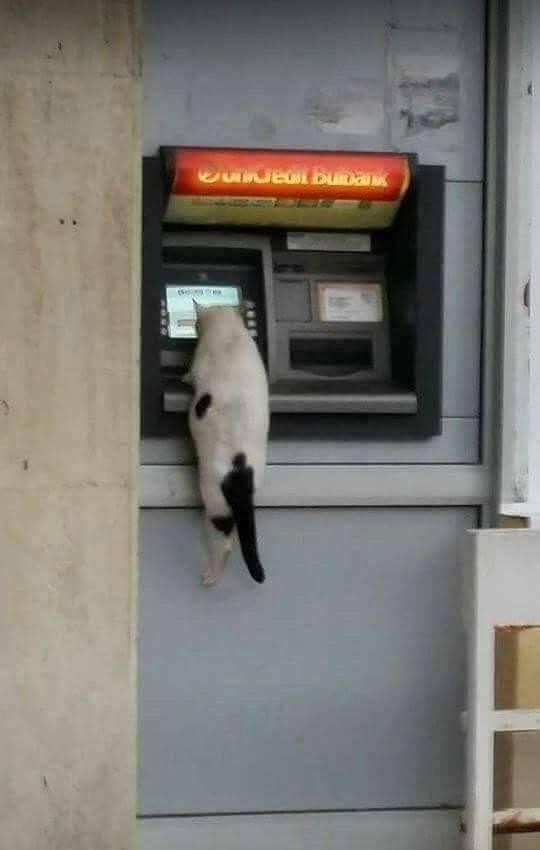 chat-distributeur-billets