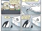 orque-joue-proie-avant-manger