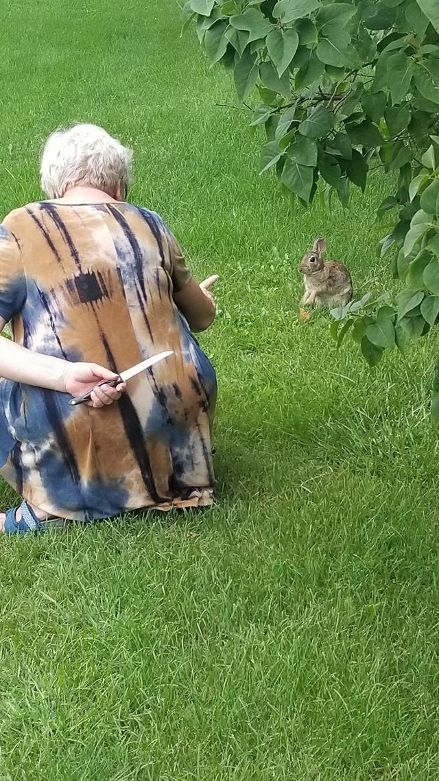 viens-petit-lapin