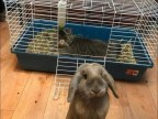 chat-vole-cage-lapin