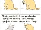 chat-pas-vomir-carrelage