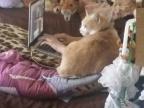 personne-sait-etes-chat-internet