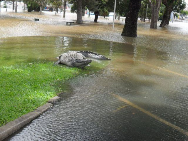 images-vrac-47-inondation-crocodile-ville
