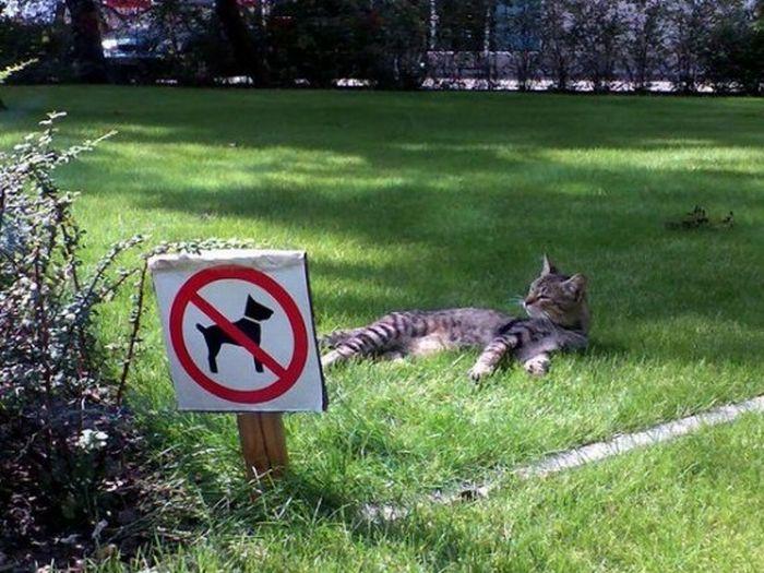 images-vrac-47-pelouse-interdite-chiens-chats