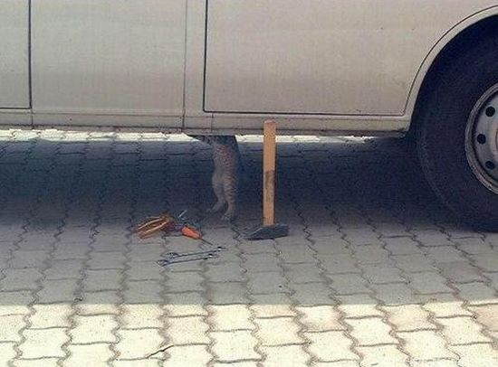 chat-repare-voiture