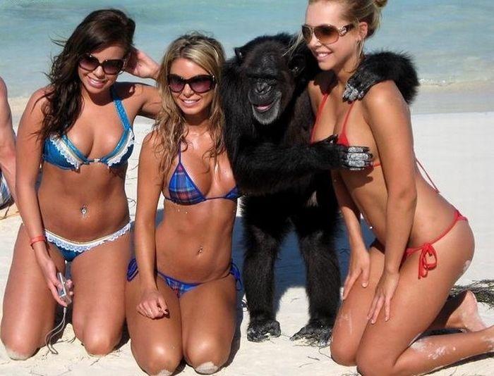 filles-bikini-singe-pervers