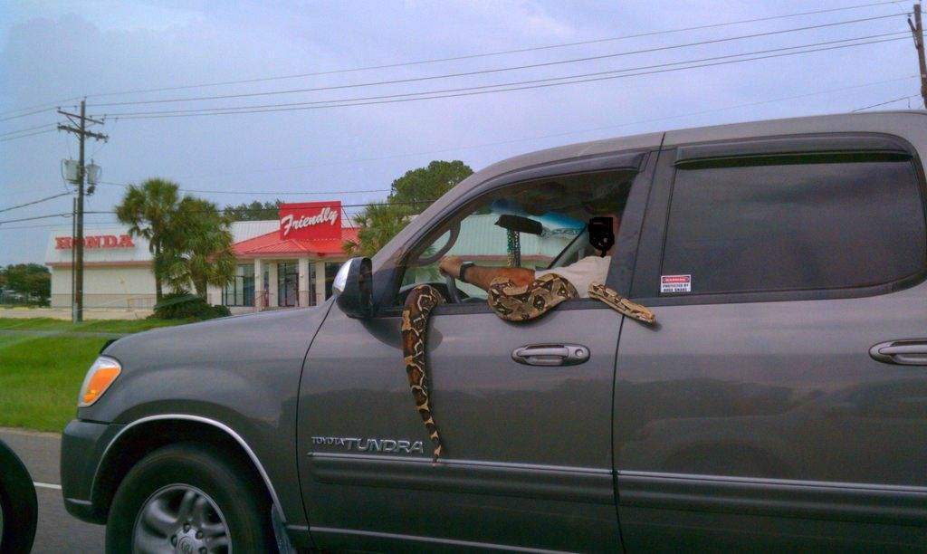 serpent-aime-balades-voiture