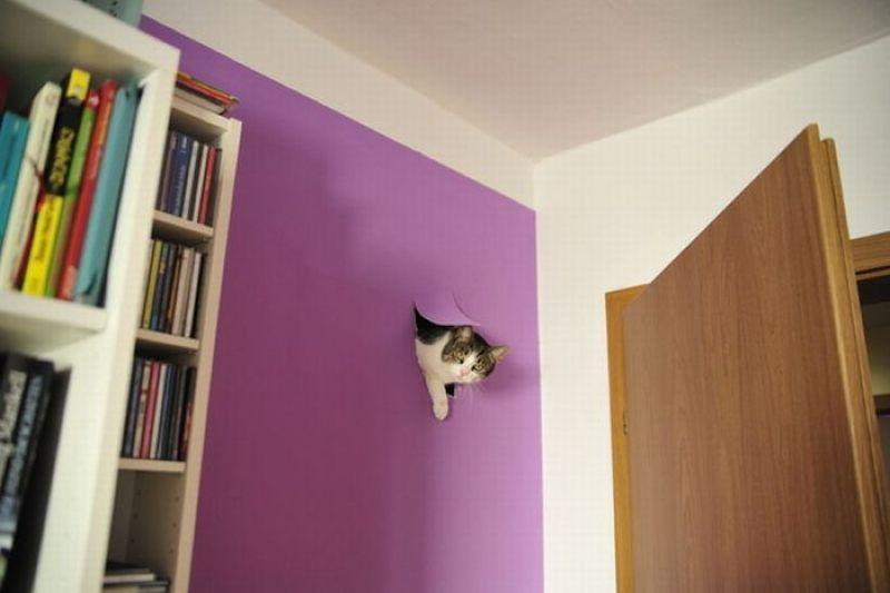 wall-cat