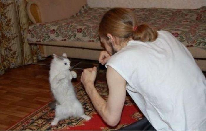 chaton-boxe-avec-homme
