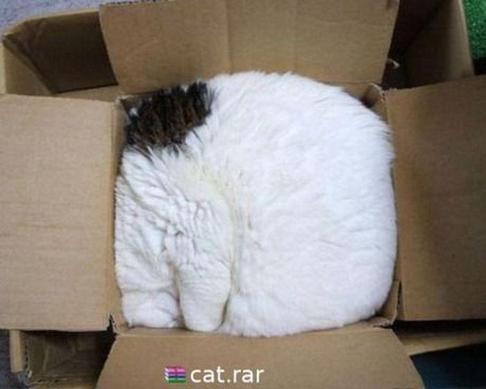cat-rar