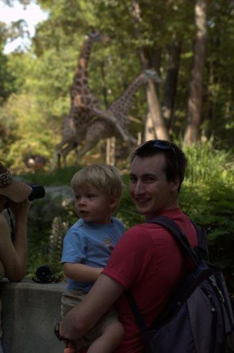 girafes-accouplent-second-plan