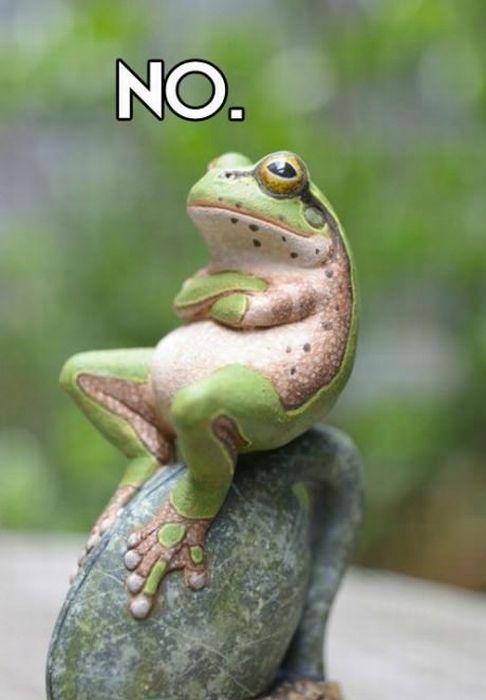 grenouille-no