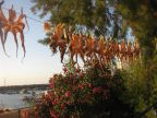 secger-poulpes-soleil