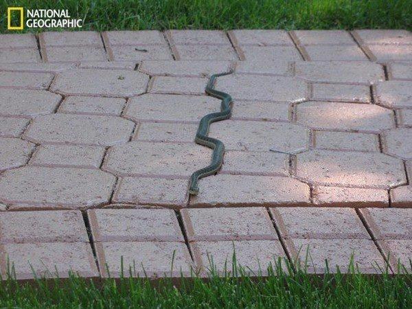 serpent-passe-entre-les-dalles