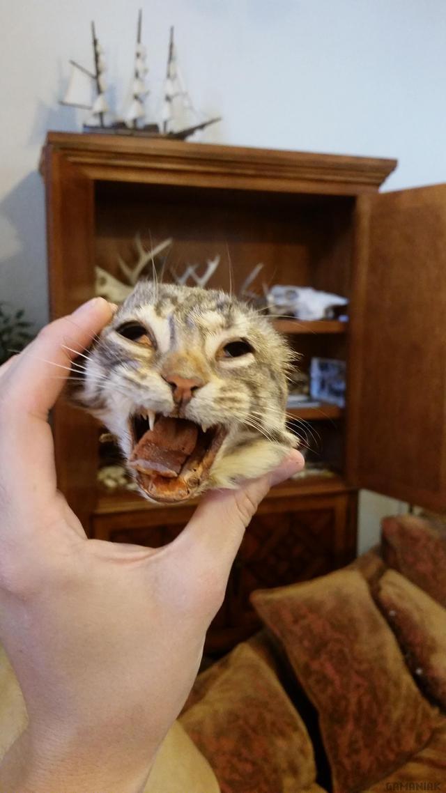 souvenir-dissection-svt-tete-chat