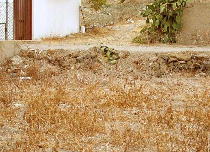 Image Trouvez le chat dans cette image 2