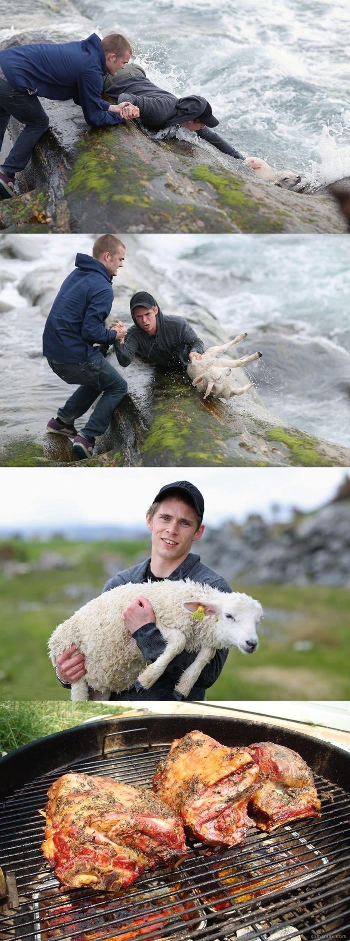 Image Sauvetage d'un mouton et fin heureuse