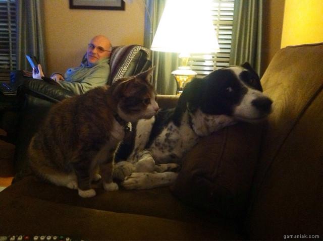 Image Chat, terrorise, chien, photo sans titre