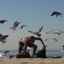 miniature pour Entourés de mouettes à la plage