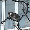 chatte-grimpe-arbres-avec-bebe