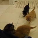 l-appel-des-chatons