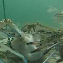 camera-attachee-filet-peche-crabe