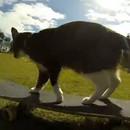 miniature pour Le chat qui fait du skateboard