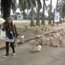 miniature pour Une île de lapins