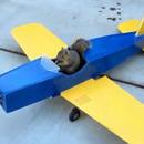 Un écureuil vole un avion