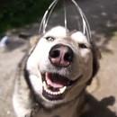 husky-adore-massage-tete