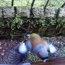 reveil-oiseau-fenetre
