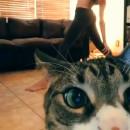 miniature pour Un chat perturbe une séance de Yoga