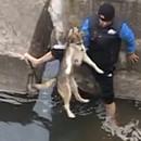 chien-montre-joie-apres-sauvetage