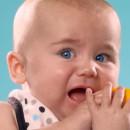 miniature pour Des bébés goutent leur premier citron