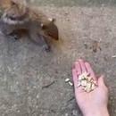 miniature pour Comment apprivoiser un écureuil