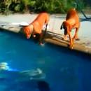 chien-panique-maitre-sous-eau