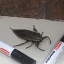 bloquer-gros-insecte-inconnu