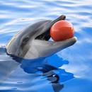 dauphins-bien-plus-intelligents-que-vous-ne-le-pensez