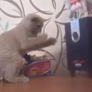 miniature pour Un chat qui tente d'attraper le vent des basses