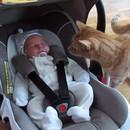 chat-voit-bebe-premiere-fois