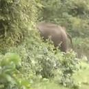 miniature pour Le barrissement d'un éléphant est flippant