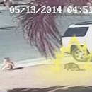 chat-super-saiyan-sauve-enfant-chien