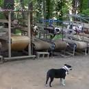 salle-de-sport-pour-chiens