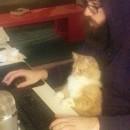 lutte-chat-comprendre