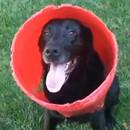 chien-aime-jouer-seau