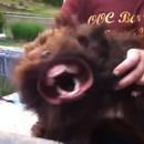 chien-transforme-monstre-souffleur